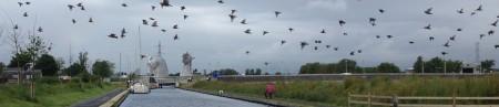 BirdsWide01